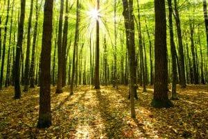 Guia do Slackline: como escolher as melhores árvores para prender as fitas?